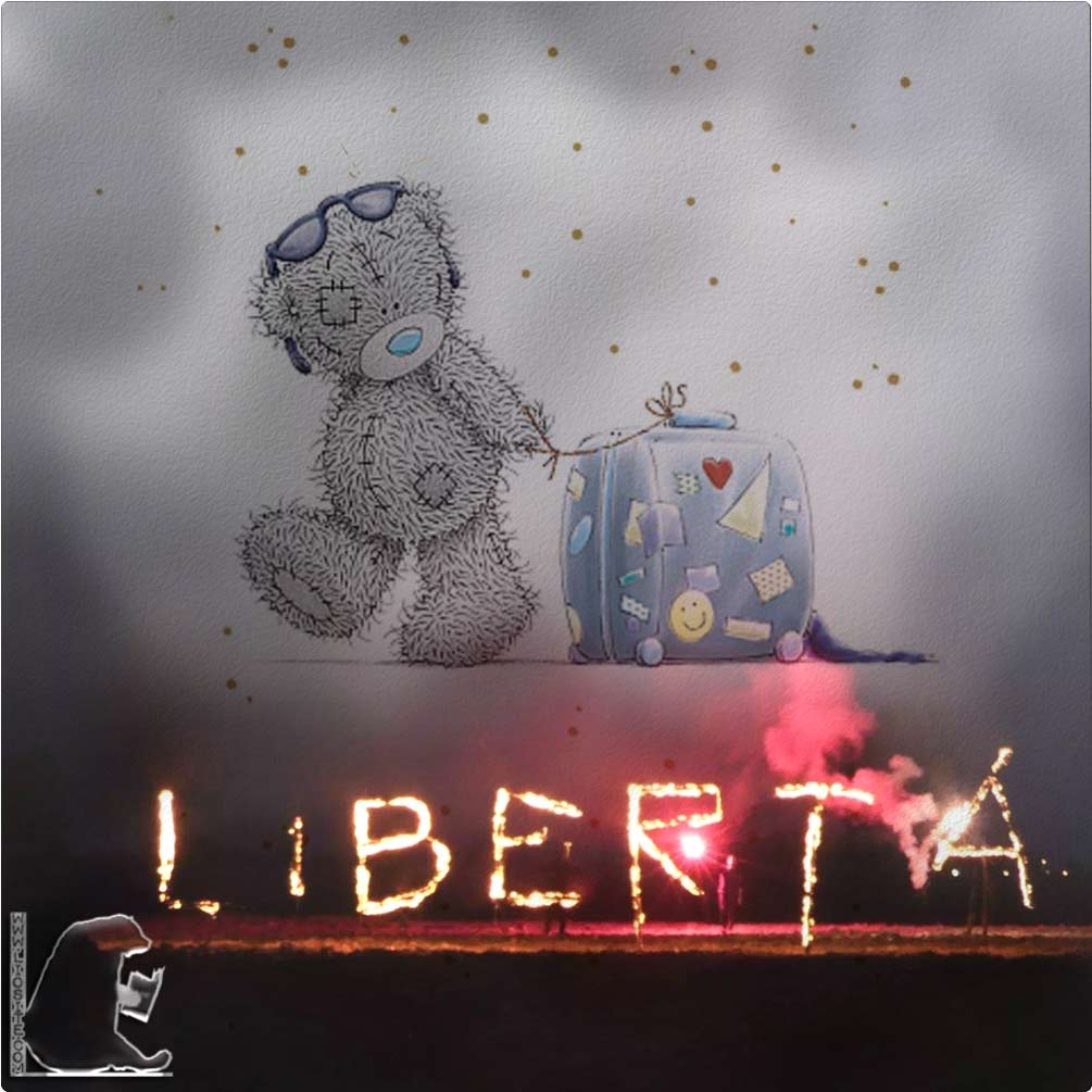 Orso tatty e libertà
