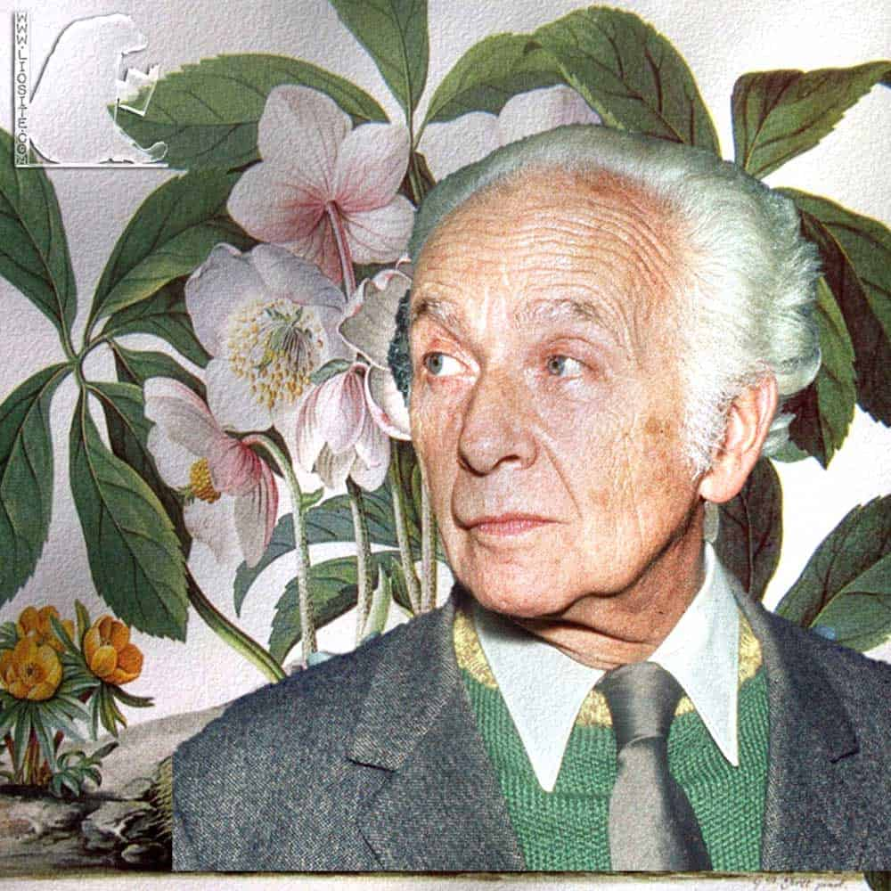 Foto elaborata di Louis Aragon con sullo sfon do una illustrazione di rose di Natale